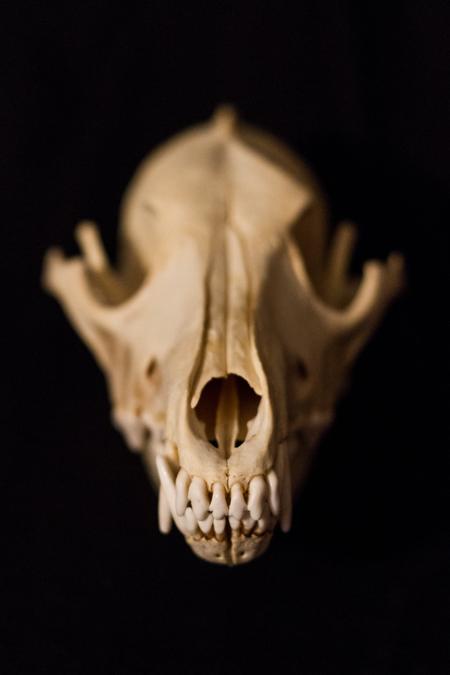 Skulls_pre
